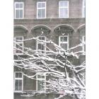 0601-schneezweigerln