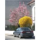 0703-magnolien-mitsi