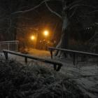 0711-05-nacht-im-park-2