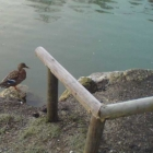 0801-3-daisy-duck