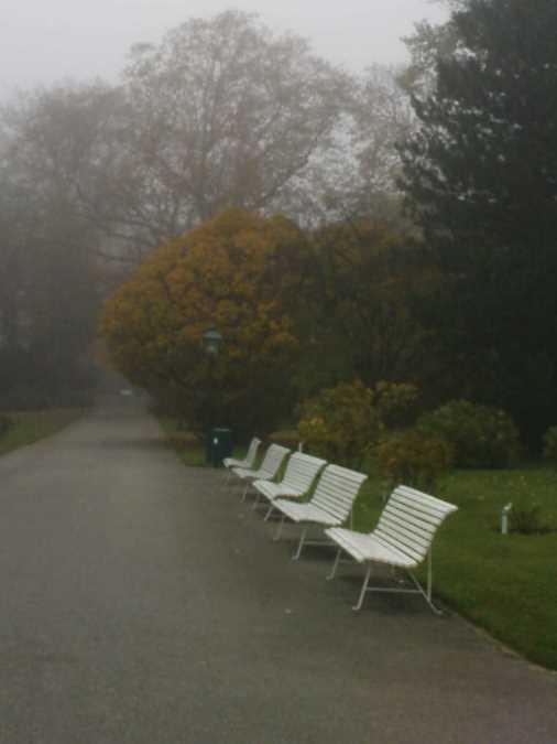 0811-6-rosarium-im-nebel