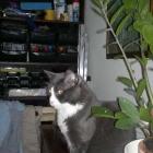 20110720-bj-auf-meinem-buerokastel